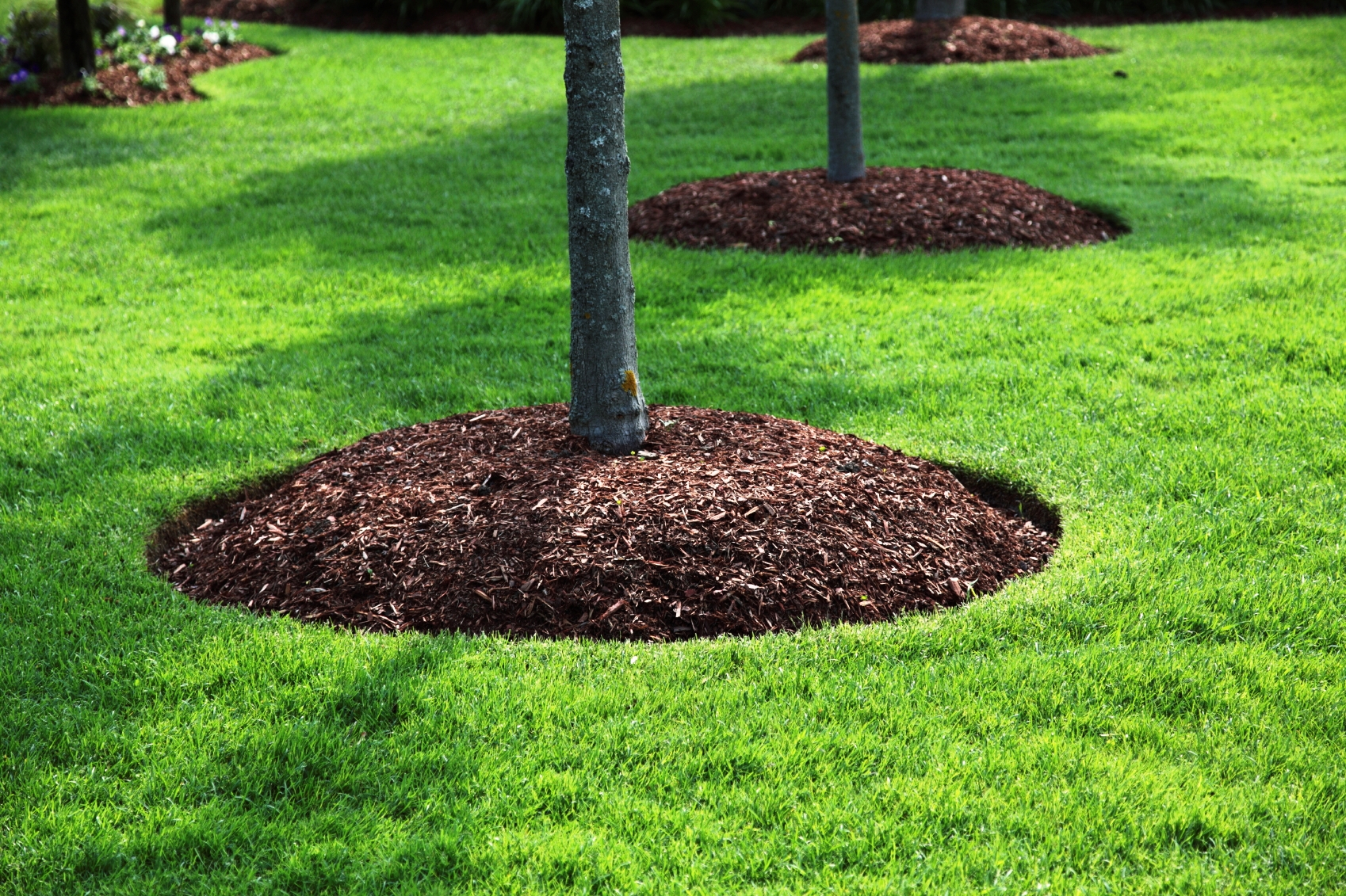How To Landscape Around A New House : Mulching abel tree removal