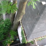 Summer Tree Trimming?                                                                                                                                      Are your trees getting too close to your house, power lines, or just getting too big?